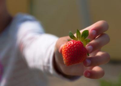 Dejte si čerstvé jahody