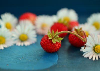 Bavorovské jahody